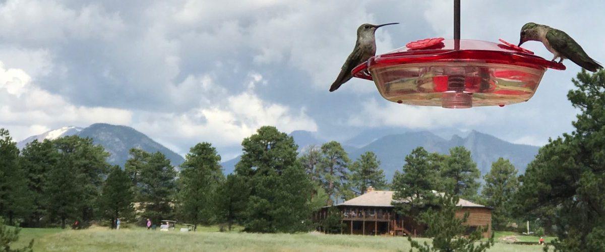 Hummingbirds off the back deck