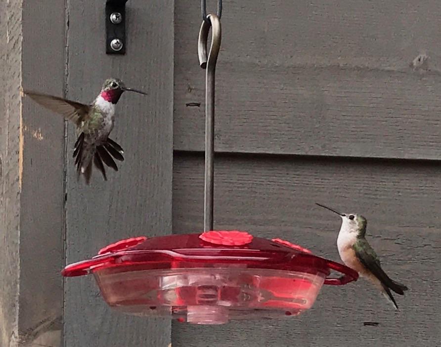 Enjoy hummingbird sightings