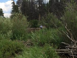 Fly-Fishing-in-Fish-Creek-Colorado-4