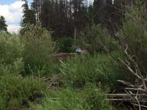 Fly-Fishing-in-Fish-Creek-Colorado-4
