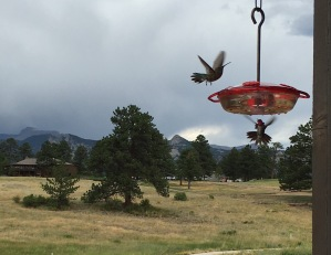 The hummingbirds at the feeder on the deck